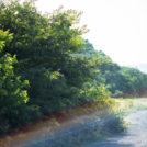 山本嵩 写真展 「Childhood landscape」