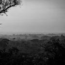 青木弘 写真展「樹平線~中央アフリカの宇宙(コスモス)~」