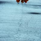 西田茂雄 写真展「世界遺産 仁和寺」