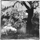 榎本敏雄 プラチナプリント写真展「薄明の櫻」
